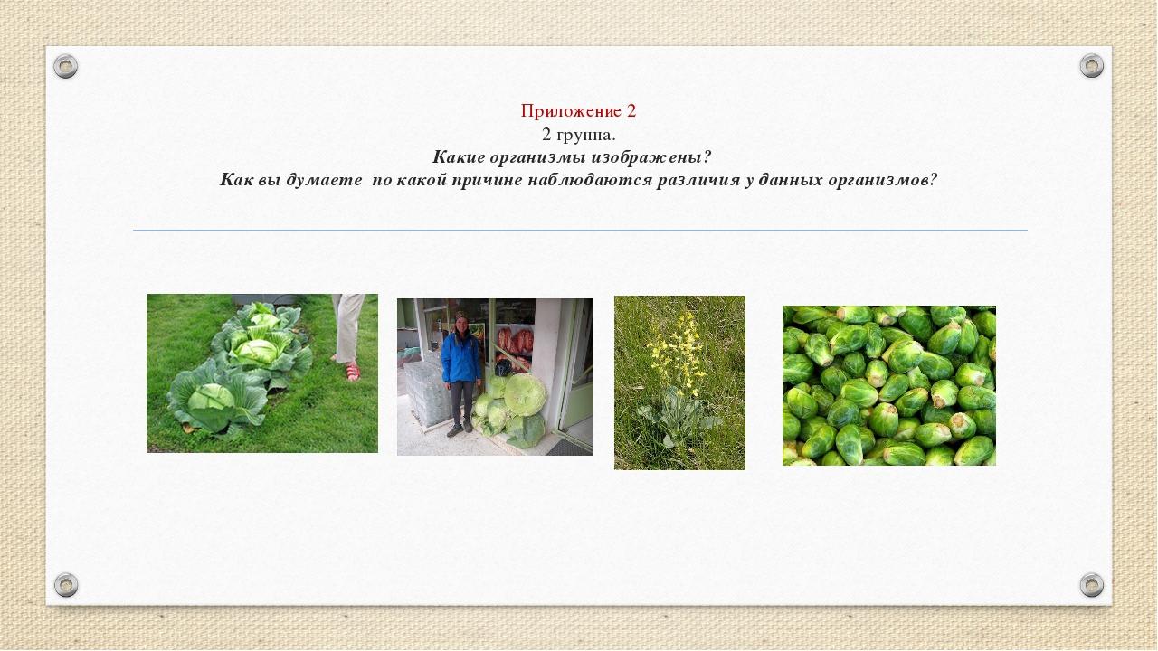 Приложение 2 2 группа. Какие организмы изображены? Как вы думаете по какой пр...