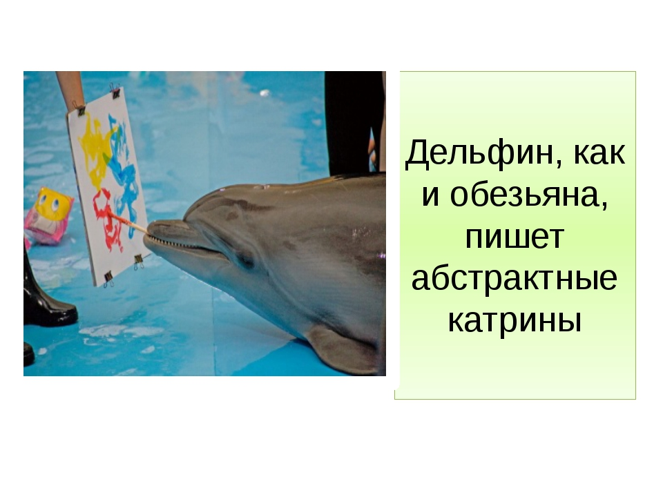 Дельфин, как и обезьяна, пишет абстрактные катрины