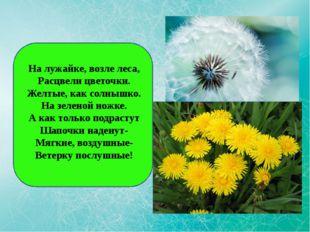 На лужайке, возле леса, Расцвели цветочки. Желтые, как солнышко. На зеленой