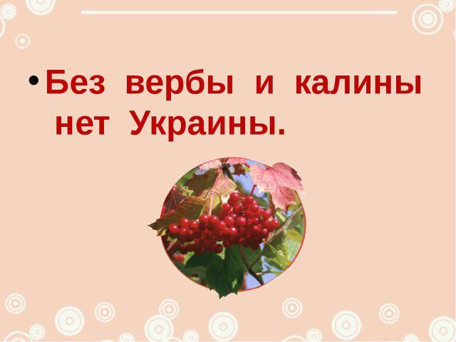 Без вербы и калины нет Украины.