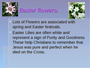 Easter flowers. Lots of Flowers are associated with spring and Easter festiva