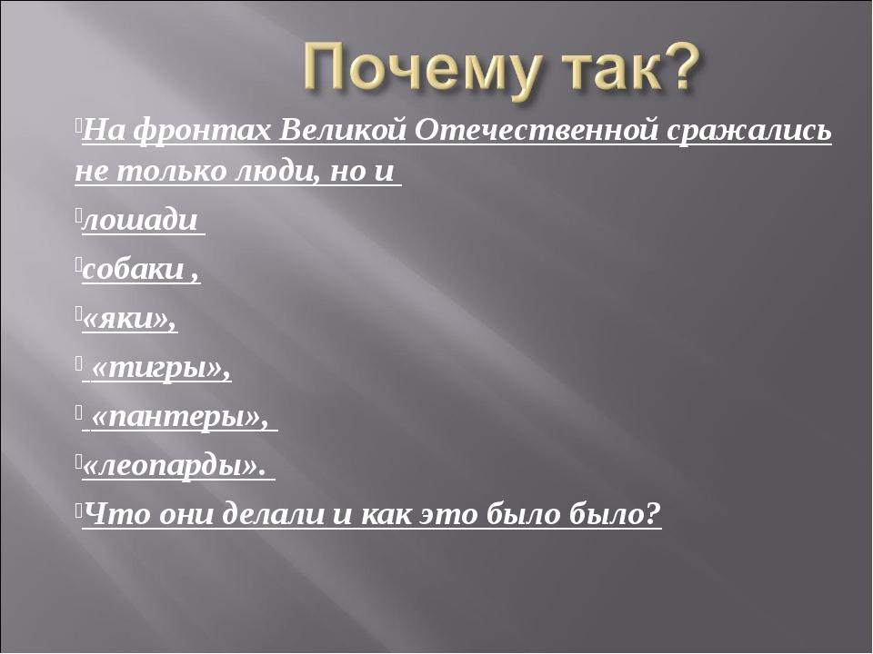 На фронтах Великой Отечественной сражались не только люди, но и лошади собаки...