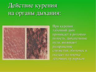 Действие курения на органы дыхания: При курении табачный дым проникает в рот