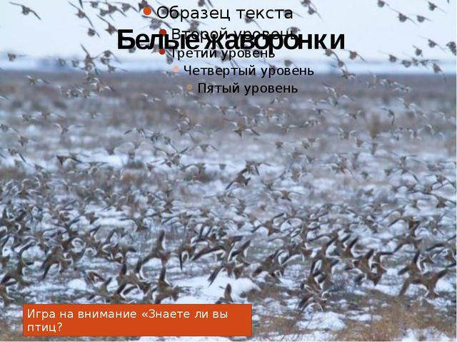 Белые жаворонки Игра на внимание «Знаете ли вы птиц?