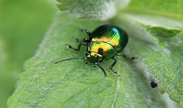 F:\насекомые\светлячок.jpg