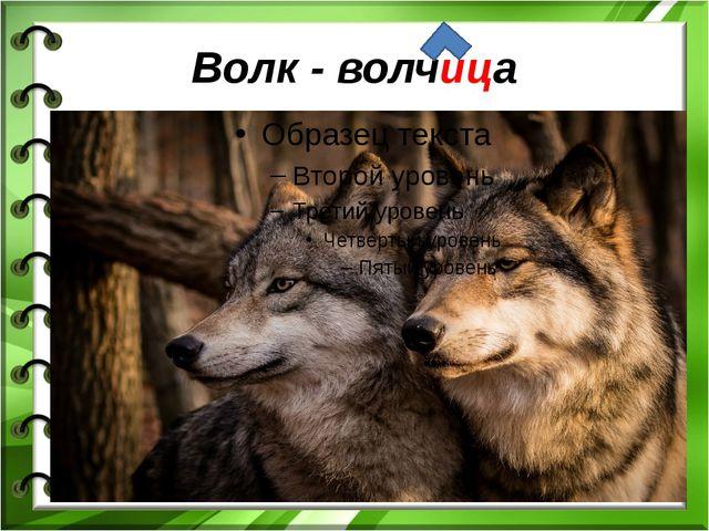 Волк - волчица
