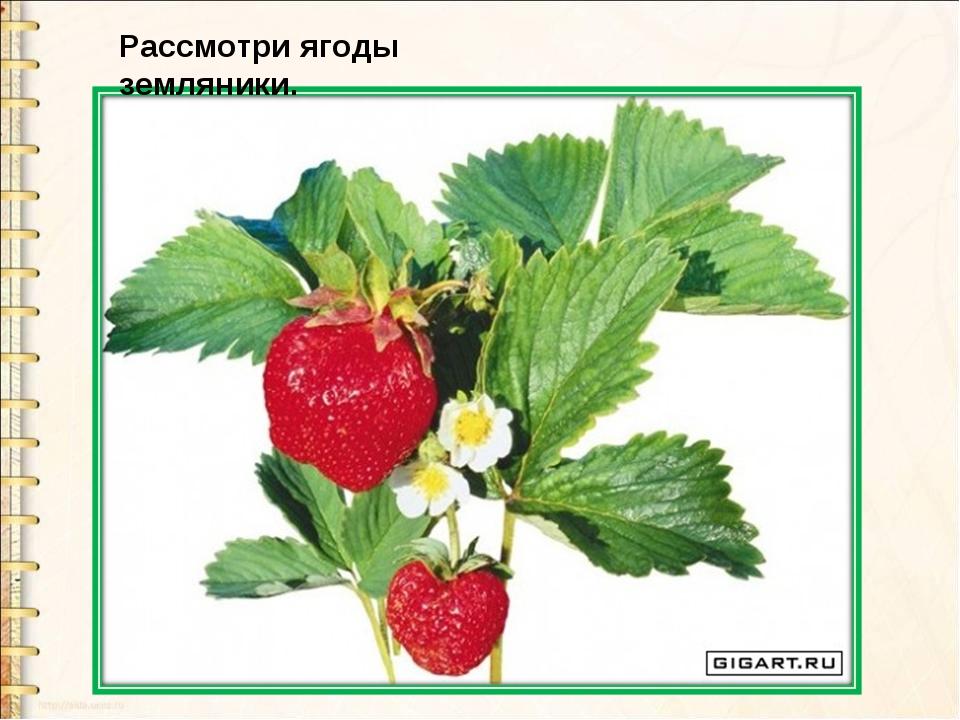 Рассмотри ягоды земляники.