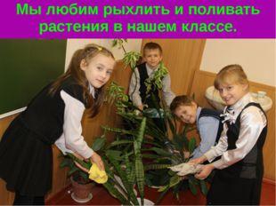 Мы любим рыхлить и поливать растения в нашем классе.