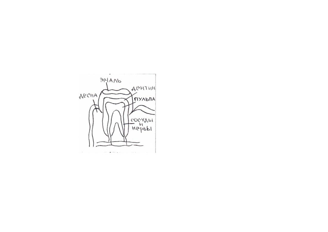 пищеварительная система червей схема