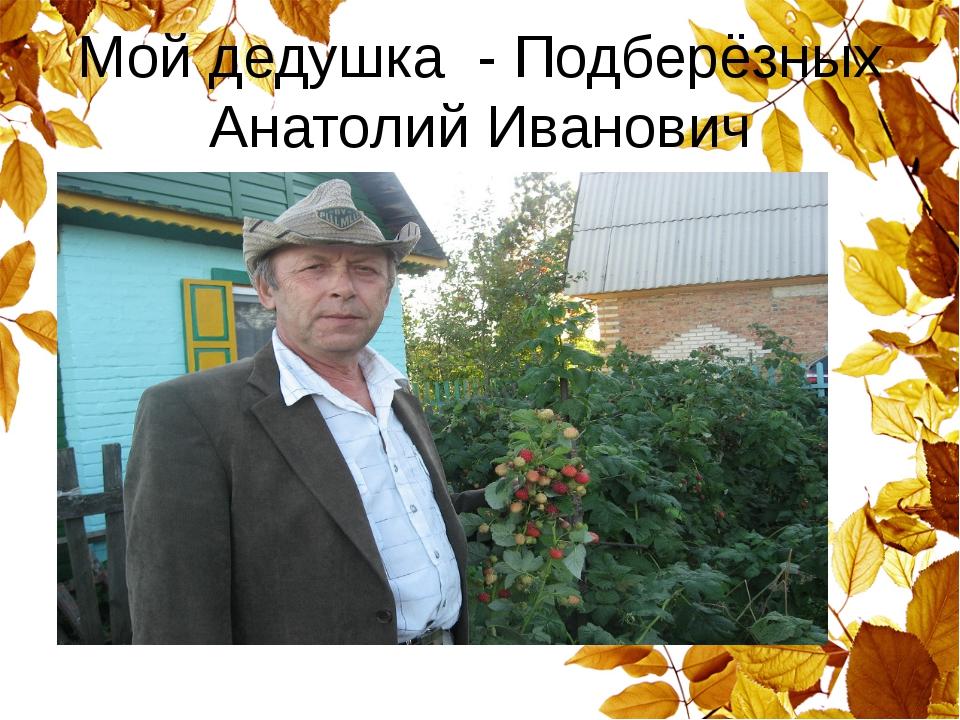 Мой дедушка - Подберёзных Анатолий Иванович
