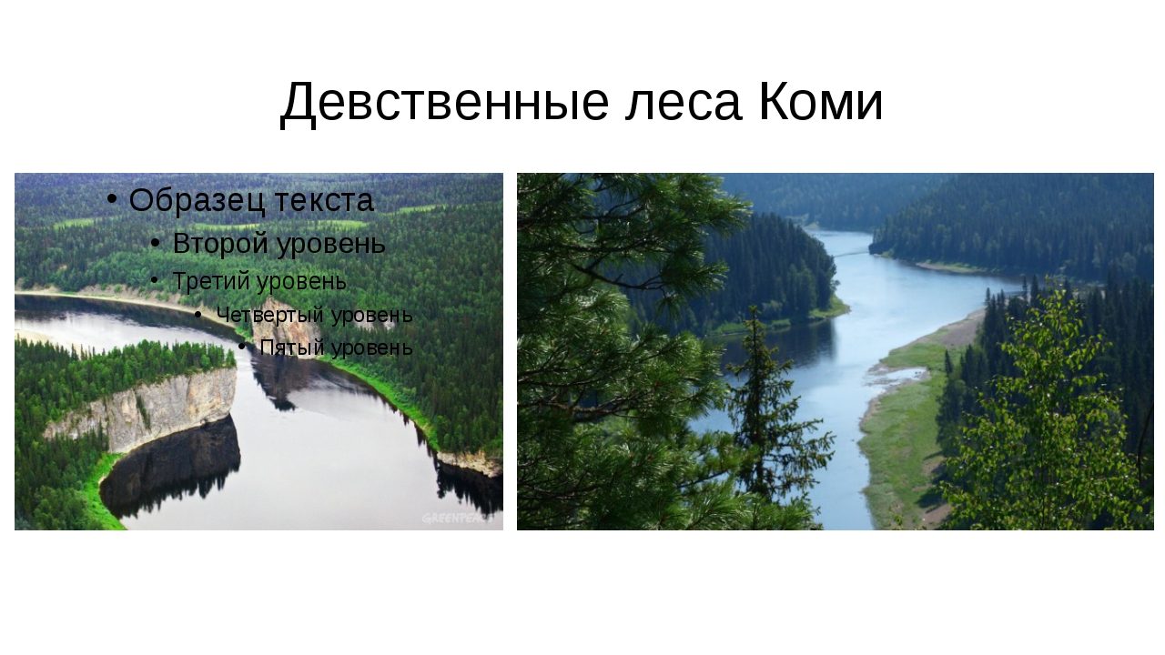 Девственные леса Коми