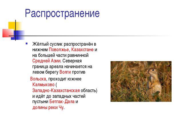 Распространение Жёлтый суслик распространён в нижнемПоволжье,Казахстанеи н...
