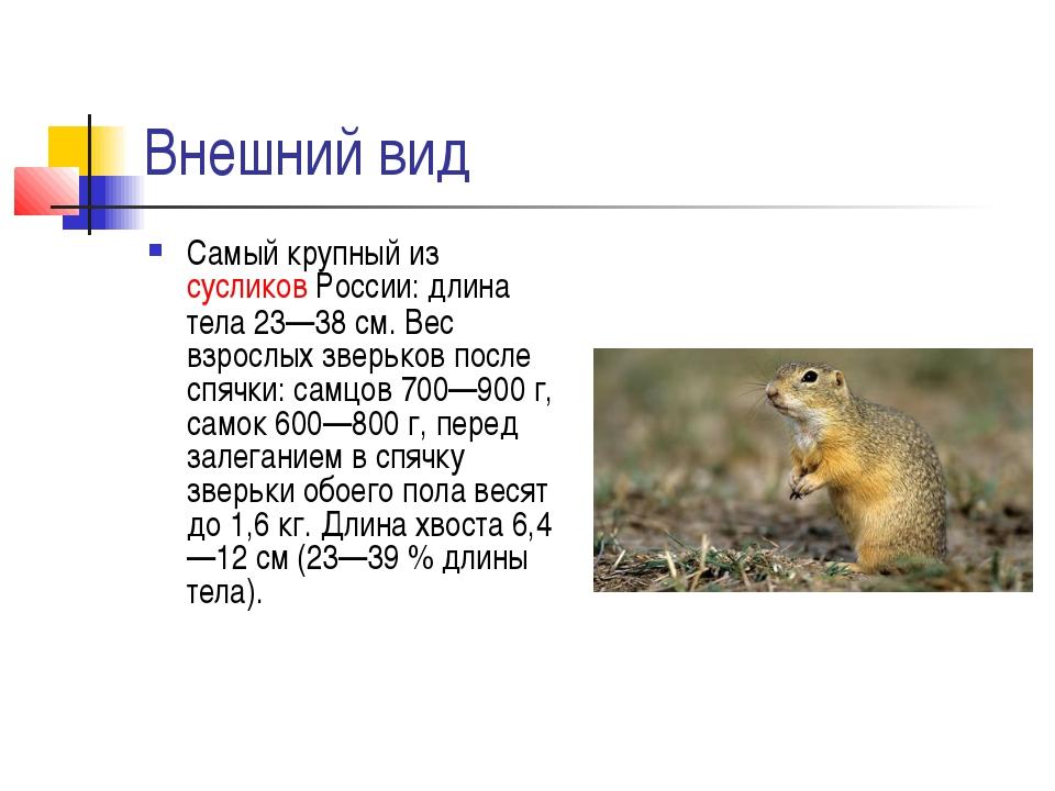 Внешний вид Самый крупный изсусликовРоссии: длина тела 23—38 см. Вес взросл...
