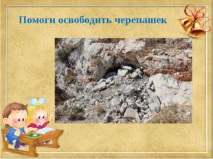 Помоги освободить черепашек