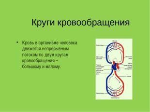 Круги кровообращения Кровь в организме человека движется непрерывным потоком
