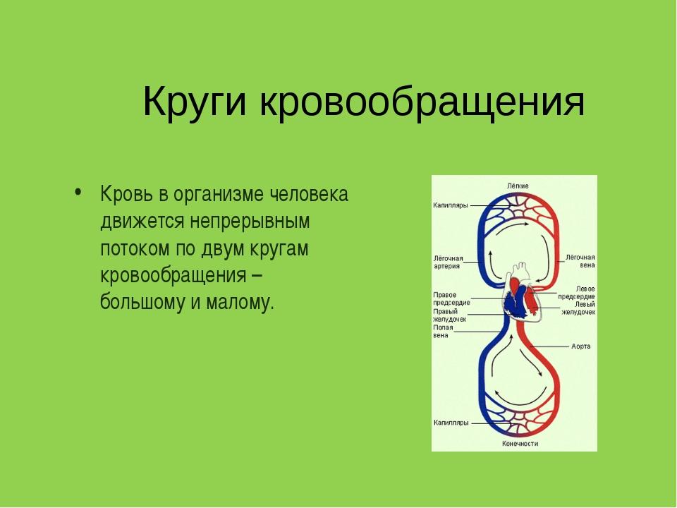 Круги кровообращения Кровь в организме человека движется непрерывным потоком...