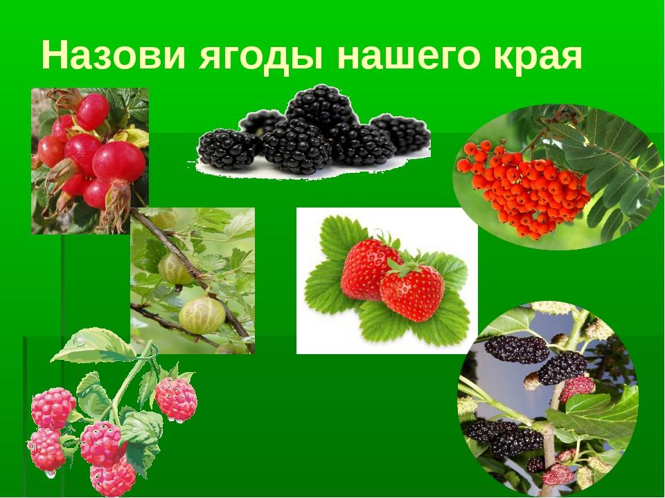 Назови ягоды нашего края