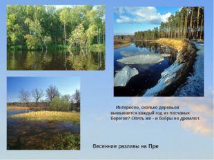 Интересно, сколько деревьев вымывается каждый год из песчаных берегов? Опять