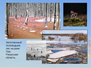 Затопленный половодьем лес на реке Пре, Рязанская область.