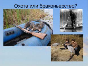 Охота или браконьерство?