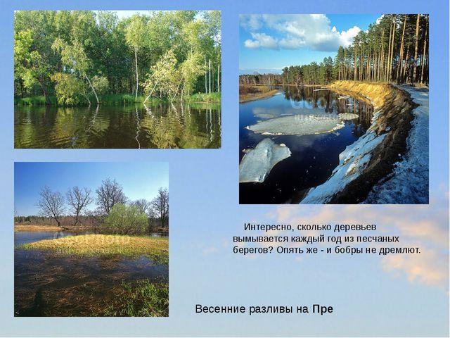 Интересно, сколько деревьев вымывается каждый год из песчаных берегов? Опять...