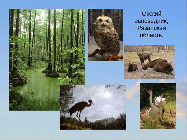 Окский заповедник, Рязанская область.