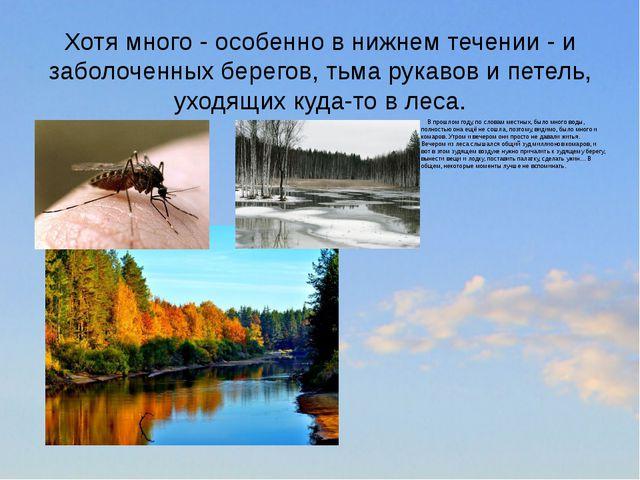 Хотя много - особенно в нижнем течении - и заболоченных берегов, тьма рукавов...