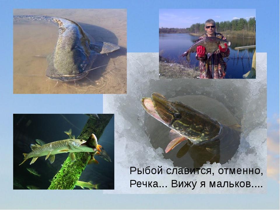 Рыбой славится, отменно, Речка... Вижу я мальков....
