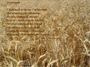 Агроном Главный в поле – агроном, Он командует зерном. Чтобы каждое зерно Был