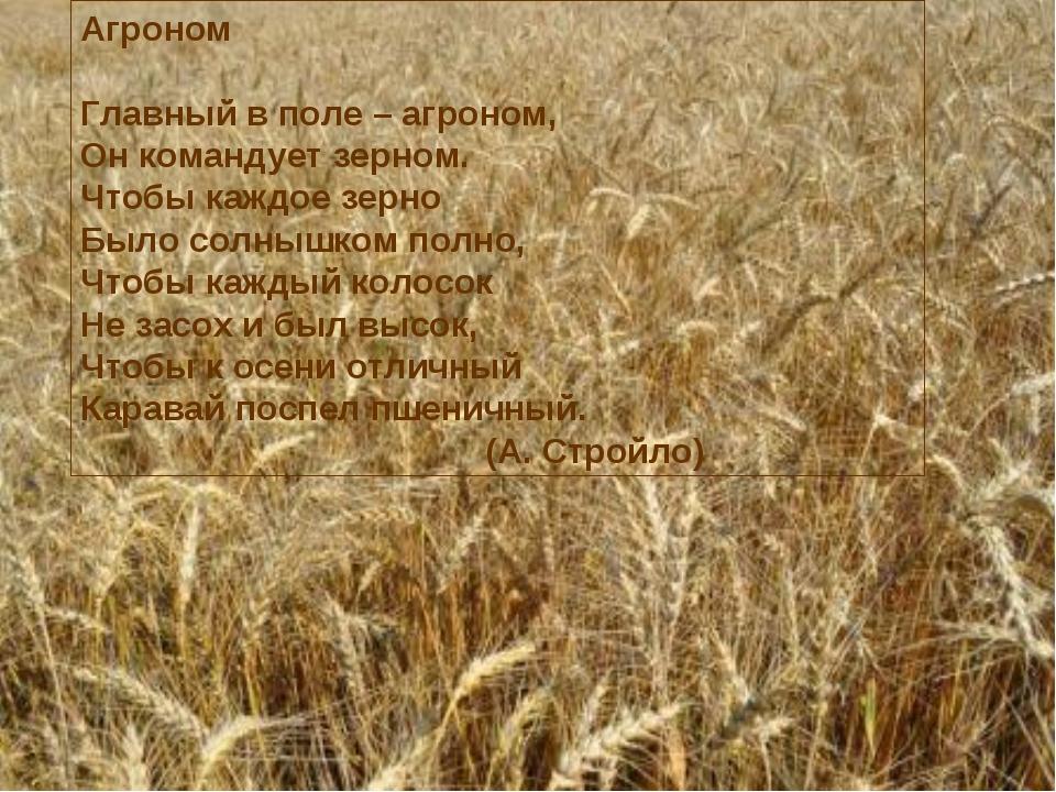 Агроном Главный в поле – агроном, Он командует зерном. Чтобы каждое зерно Был...