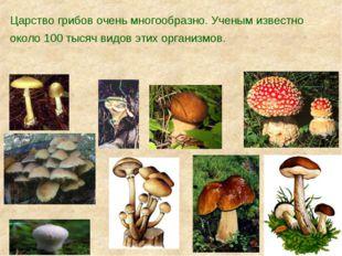 Царство грибов очень многообразно. Ученым известно около 100 тысяч видов этих