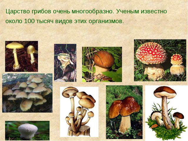 Царство грибов очень многообразно. Ученым известно около 100 тысяч видов этих...