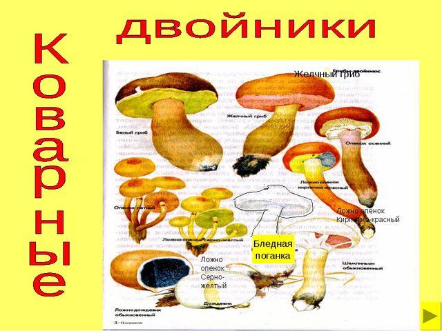 Желчный гриб Бледная поганка Ложно опенок Серно- желтый Ложно опенок Кирпично...