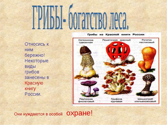 Относись к ним бережно! Некоторые виды грибов занесены в Красную книгу России...