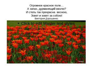 Огромное красное поле… А запах, дурманящий вволю? И степь так прекрасна весн