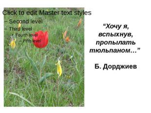 """""""Хочу я, вспыхнув, пропылать тюльпаном…""""  Б. Дорджиев"""