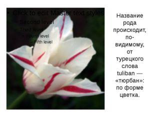 Название рода происходит, по-видимому, от турецкого слова tuliban — «тюрбан»: