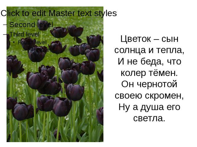 Цветок – сын солнца и тепла, И не беда, что колер тёмен. Он чернотой своею с...