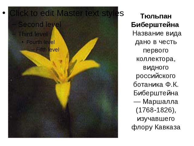 Тюльпан Биберштейна Название вида дано в честь первого коллектора, видного ро...