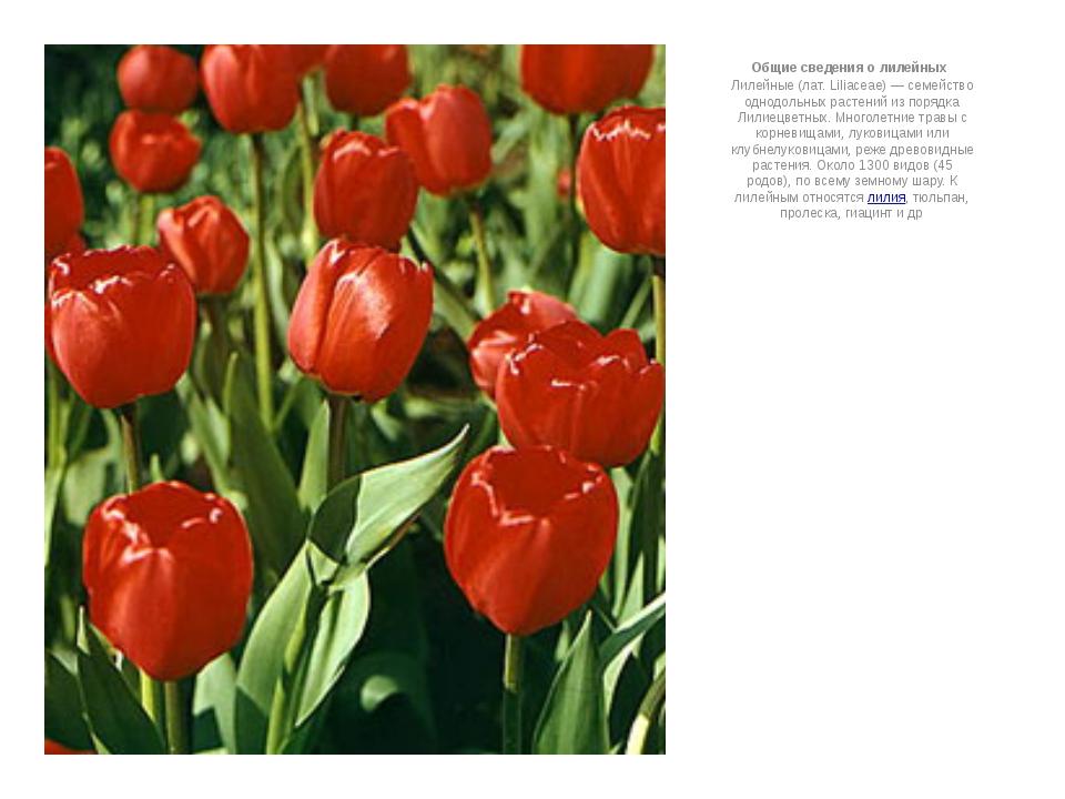 Общие сведения о лилейных Лилейные (лат. Liliaceae) — семейство однодольных...