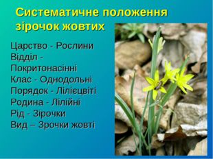 Систематичне положення зірочок жовтих Царство - Рослини Відділ - Покритонасін