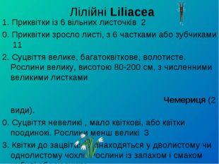 Лілійні Liliacea 1. Приквітки із 6 вільних листочків 2 0. Приквітки зросло л
