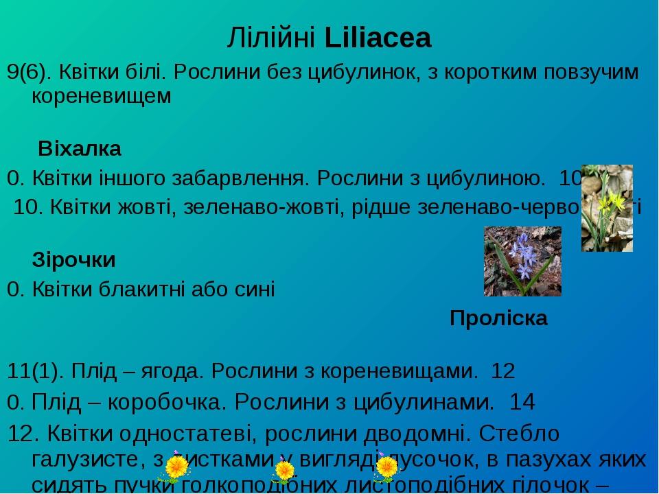 Лілійні Liliacea 9(6). Квітки білі. Рослини без цибулинок, з коротким повзучи...