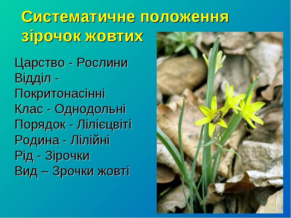 Систематичне положення зірочок жовтих Царство - Рослини Відділ - Покритонасін...