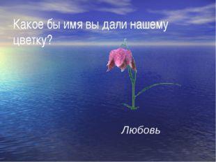 Какое бы имя вы дали нашему цветку? Любовь