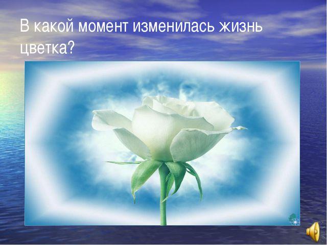 В какой момент изменилась жизнь цветка?