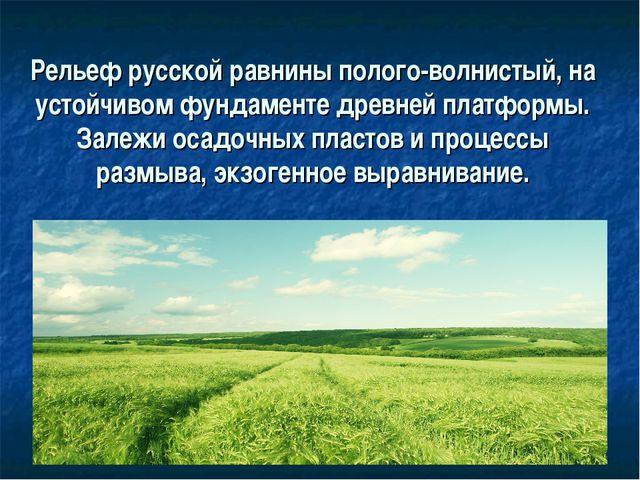 Рельеф русской равнины полого-волнистый, на устойчивом фундаменте древней пл...