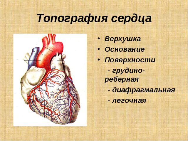 Топография сердца Верхушка Основание Поверхности - грудино-реберная - диафраг...