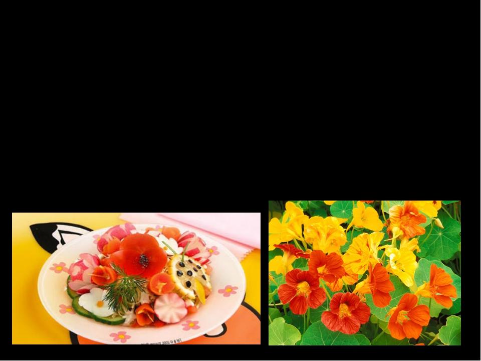Настурция У настурции все части растения обладают пряным вкусом, что делает е...