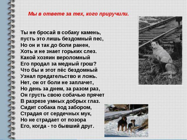 Ты не бросай в собаку камень, пусть это лишь бездомный пес, Но он и так до бо...